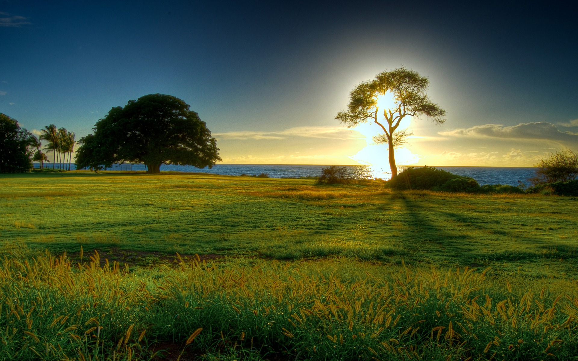 spring-wild-field-nature