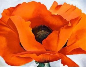 red-poppy.jpg!Blog